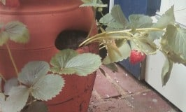 Top 10 Garden Pests